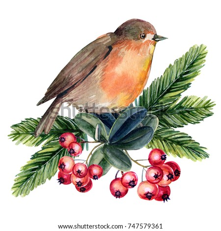 christmas decorations bird robin berries spruce branches watercolor illustration