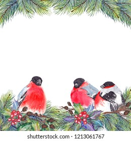 Christmas frame with red bullfinch birds, holly berries, pine branches, cones and dry twigs. Watercolor on white background.