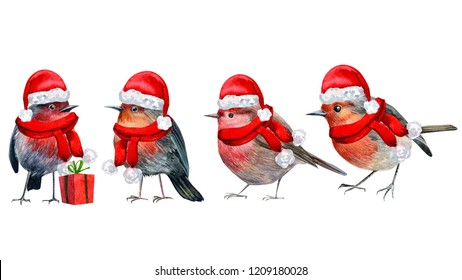 Christmas holiday, Robin little bird in a red hat on an isolated white background, watercolor illustration, hand drawing, greeting card.