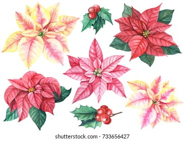 Christmas set of flowers poinsettia, berries holly, watercolor hand drawing, botanical drawing,