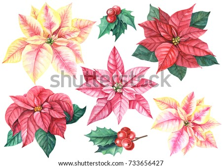 christmas set flowers poinsettia berries holly stock illustration