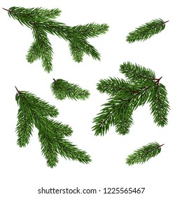 Christmas tree branches set for a Christmas decor. Branches close-up. Set of Fir Branches.