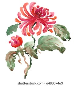 Chrysanthemum, painted in watercolor. Hand-drawing illustration Stylized traditional Chinese painting, Japanese art sumi-e