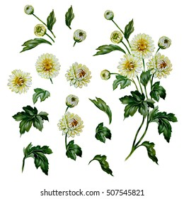 Chrysanthemum set. Watercolor painting  for design of invitations, web pages, wedding invitations, textile and other objects. Isolated illustration on white.