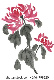 Chrysanthemum as a symbol of Japan and China. Watercolor hand painted flower on white background. Traditional oriental ink painting sumi-e, u-sin, go-hua.