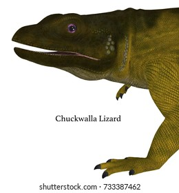 Chuckwalla Lizard Head with Font 3d illustration - The Chuckwalla is a large lizard found primarily in arid regions of the southern United States and northern Mexico.