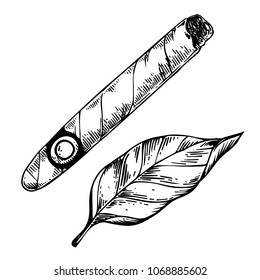 Cigar and tobacco leaf engraving raster illustration. Scratch board style imitation. Black and white hand drawn image.