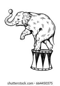 Circus elephant illustration. Scratch board style imitation. Hand drawn image.
