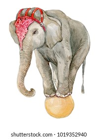 circus elephant on the ball .Watercolor illustration