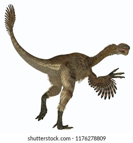 Citipati Female Dinosaur Tail 3D illustration - Citipati was a carnivorous Velociraptor dinosaur that lived in Mongolia during the Cretaceous Period.