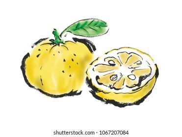 Citron fruit Freehand drawing illustration