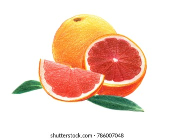 Citrus fruit grapefruit in whole and in a cut. Graphic drawing with colored pencils. Isolated on white background