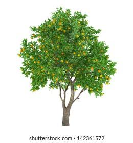 Citrus fruit tree isolated. Citrus sinensis lemon