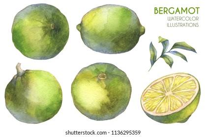Citrus fruits. Bergamot. Watercolor illustration.