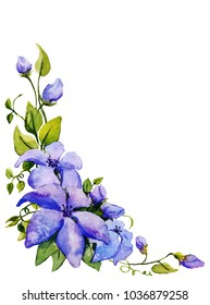 Clematis flowers bouquet.Watercolor illustration.Hand drawn