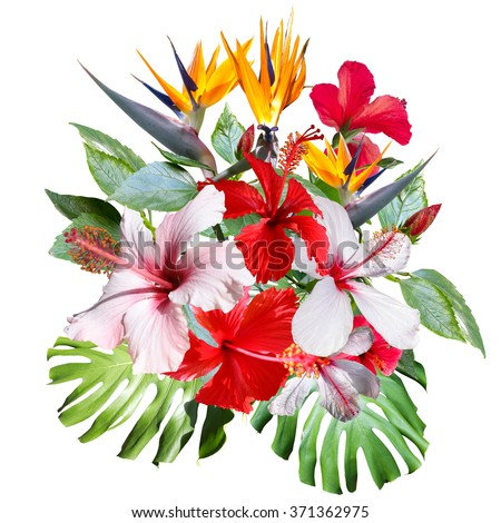 Clip art collage beautiful white tropical stock illustration beautiful white tropical flowers hibiscus close up tropical bouquet with mightylinksfo