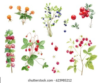 Clipboard set of watercolor hand drawn berry cliparts -foxberry, blueberry, strawberry, raspberry, gooseberry and cloudberry