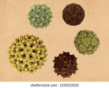 clockwise from bottom left: influenza virus, coxsackie virus, enterovirus D68, poliovirus, adeno associated virus. 3d rendering