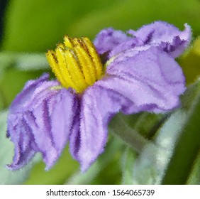Close up of a beautiful Eggplant Flower