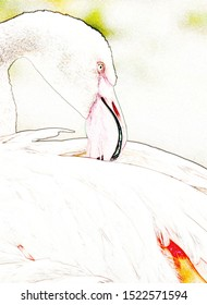 Close up of a beautiful Flamingo with a pink bill