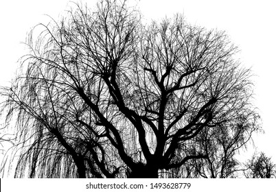 Close up of a leafless tree in winter