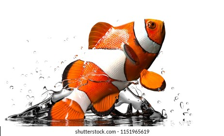 Close up macro of anemonefish jumping out of aquarium white background 3d rendering