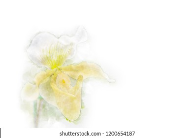 Close up of orchid flowers in watercolor painting.
