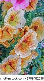 Cierre de las flores de petunia