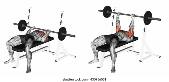Barbell Bench Press Diagram Introduction To Electrical Wiring