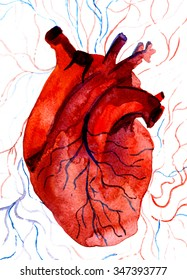 Closeup beautiful watercolor aquarelle painting hand drawn anatomic portrait of one blood-red carmine human heart cardiac chamber with blood vessels on white background, vertical picture