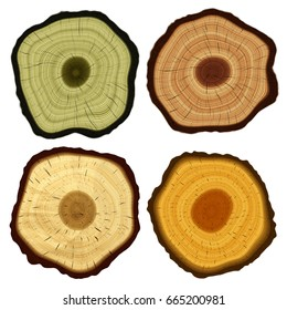Closeup of colorful tree wood annual ring / growth ring texture background, top view (High-resolution 3D CG rendering illustration)