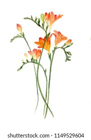 Close-up of fresh branches of orange freesia with bud. Hand-drawn watercolor illustration illustration, isolated on white background.