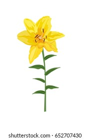 Closeup hand drawn yellow lily flower isolated on white background for wedding invitation, greeting bouquet and other design