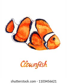 Clownfish (Anemonefish, Ocellaris clownfish, Amphiprion ocellaris), hand painted watercolor  illustration with handwritten inscription