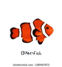 Clownfish fish animal realistic illustration