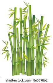 Clump of bamboo on white
