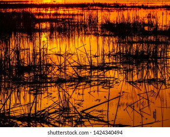 Clumps of marsh reeds in silhouette at golden hour, with digital oil-painting effect, for background or element with motifs of nature, ecosystems, the environment