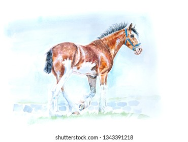 Clydesdale horse watercolor painting