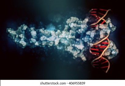c-Myc and Max transcription factors bound to DNA. 3D illustration. Protein: cartoon + wireframe representation combined with semi-transparent surfaces. DNA: cartoon ladder model.