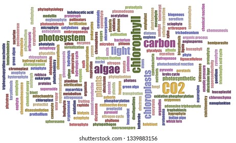 Co2 Wordcloud Mixed On White Background