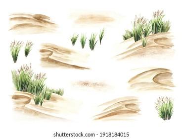 Dune côtière, ensemble d'herbes de mer. Illustration à l'aquarelle dessinée à la main isolée sur fond blanc