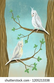 Cockatiels on branches illustration