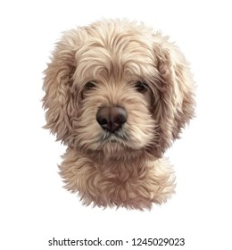 Cocker Spaniel dog isolated on a white background. Realistic Portrait of a Cute puppy. Animal art collection: Dogs. Hand Painted Illustration of Pet. Design template. Good for T-shirt, pillow, card