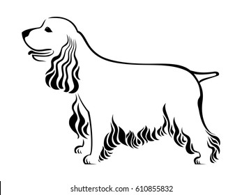 Cocker Spaniel isolated on white background.  illustration
