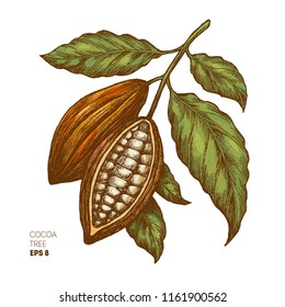 Cocoa beans illustration. Engraved style illustration. Chocolate cocoa beans.