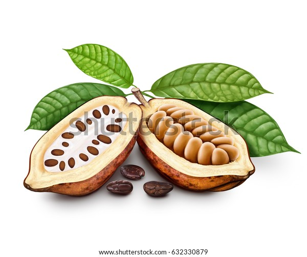 Cocoa pods, cocoa beans with leaves. illustration
