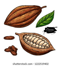 Cocoa superfood drawing set. Organic healthy food sketch. Fruit, leaf and bean. Isolated hand drawn illustration on white background. Great for banner, poster, label