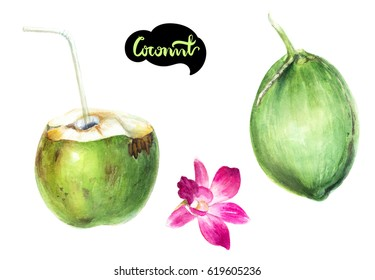 Coconut fruit watercolor illustration. Green coconut water with drinking straw, orchid flower, whole green coconut isolated on white background.