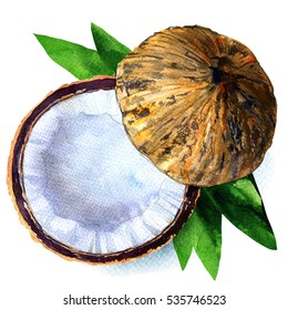 Coconut with half and leaves isolated, watercolor illustration on white