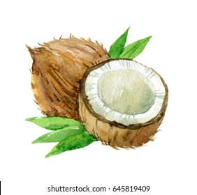 Coconut with leaves isolated on white background, watercolor illustration